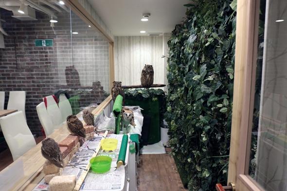 フクロウの部屋
